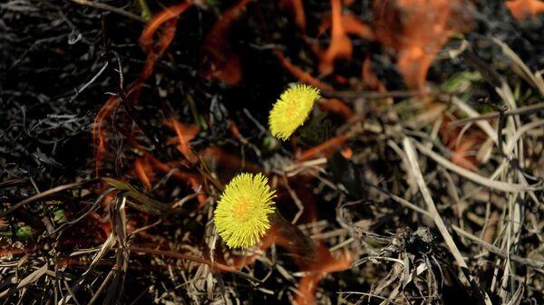 Сжигание сухой травы. Архивное фото
