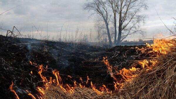 Сухая трава горит в поле. Архивное фото.