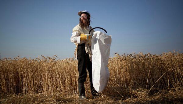 Ультра-ортодоксальный еврей во время жатвы перед началом праздника Шавуот