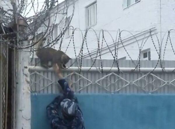 Как кот бежал из колонии