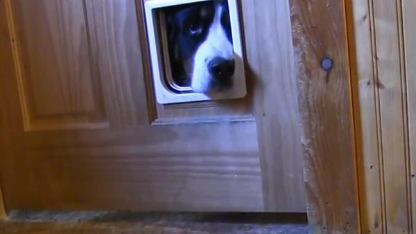Когда дверь для кота – наблюдательный пункт для собаки