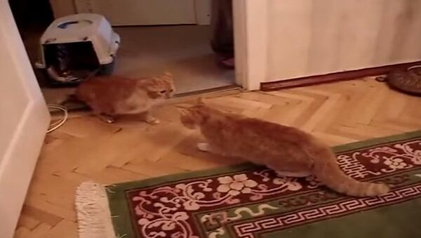 Кот Тимофей в гневе страшен