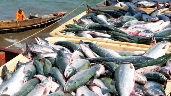 Ловля рыбы. Архивное фото