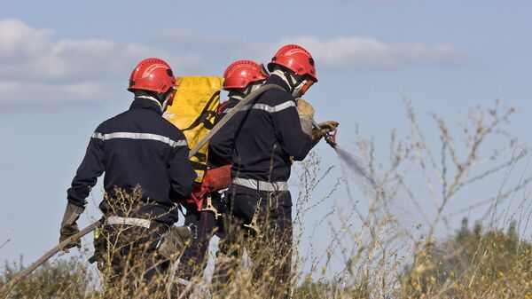 Пожарные тушат огонь в лесу. Архив