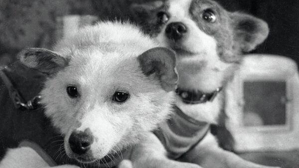 Собаки Белка и Стрелка после полета