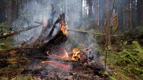 Пожары. Архивное фото