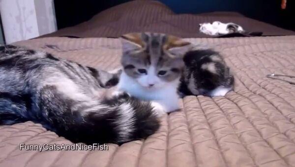 Мама отдыхает, котенок – играет