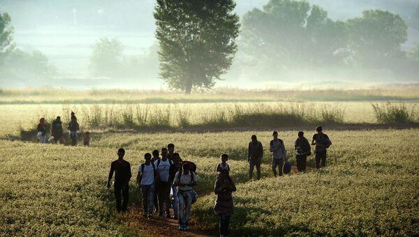 Беженцы идут по полю в сторону границы с Македонией возле деревни Идомени, Греция
