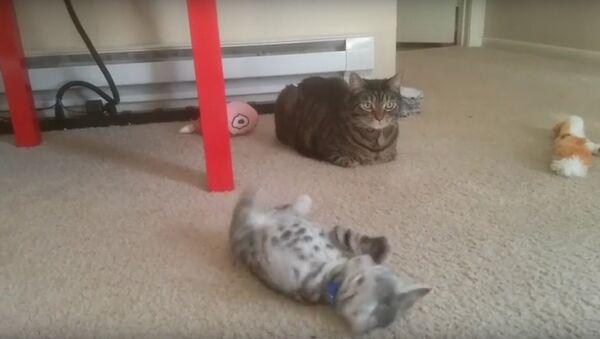 Кошка, котенок и колокольчик