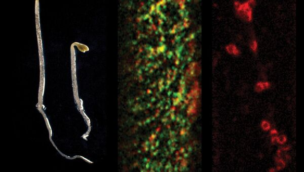 Белки, позволяющие растениям эффективно противостоять солевому стрессу
