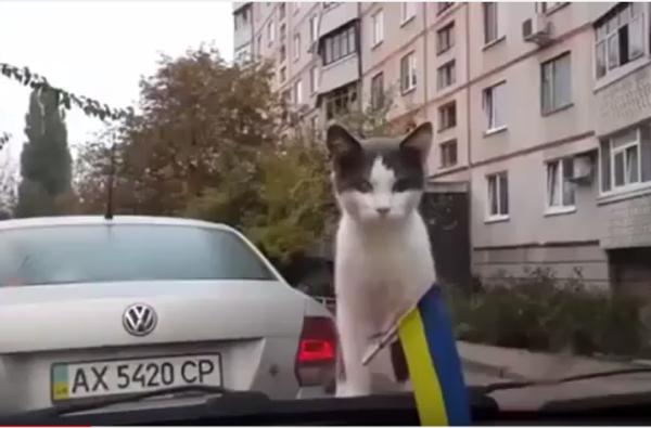 Страшно, аж жуть берет: как пугаются коты