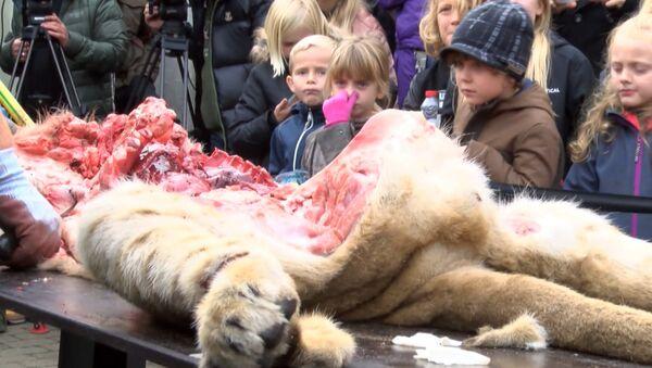 Дети зажимали носы во время публичного вскрытия льва в датском зоопарке