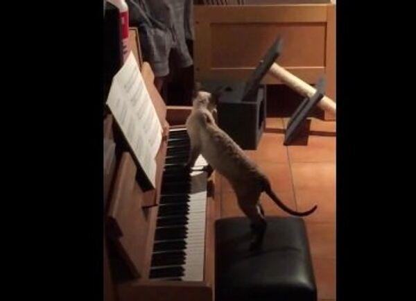 Сыграйте мне, пожалуйста, Баха