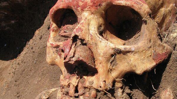 Череп одной из первых жертв чумы с российского Алтая, стоянка Афанасьево