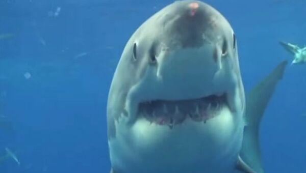 Акула слишком близко. Слишком страшно