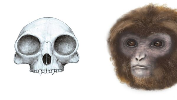 Так художник представил себе Pliobates cataloniae, предка гиббонов и человекообразных обезьян