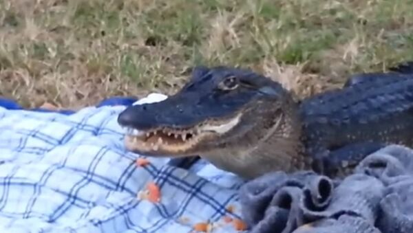 Пикник для крокодила