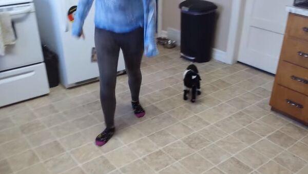 Как научить козленка прыгать