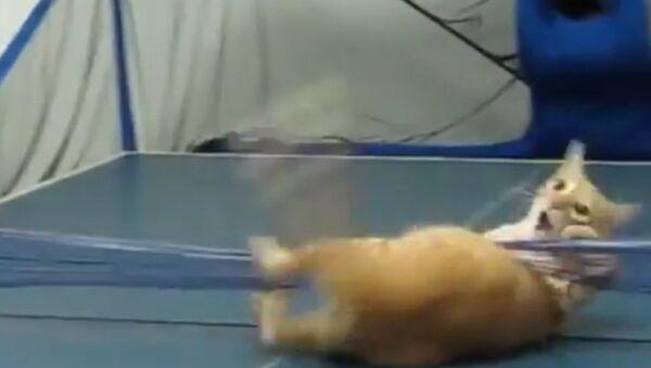 Кот-теннисист