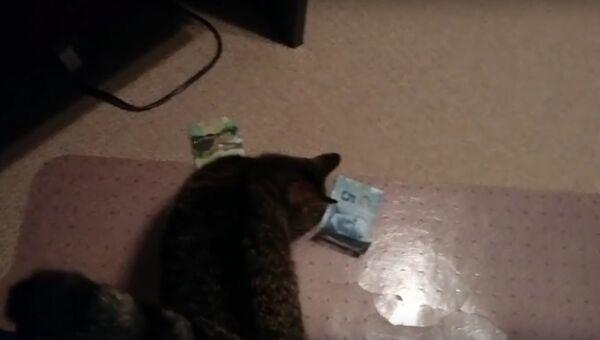 Кот ворует по-крупному