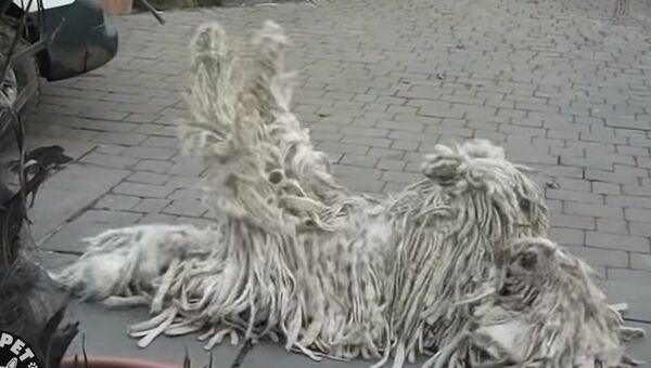 Очень забавные собачки