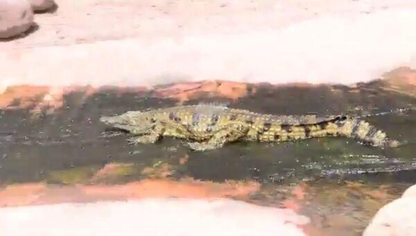 Крокодилий аквапарк