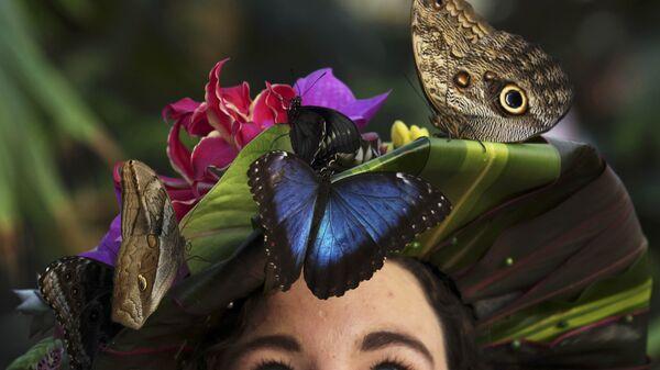 Выставка Бабочки в теплице в саду Уизли в Великобритании