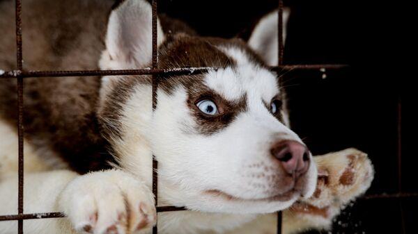 Собака в питомнике
