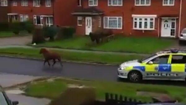 Пони убегает от полиции