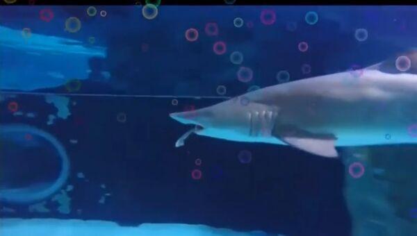 Акула акуле волк
