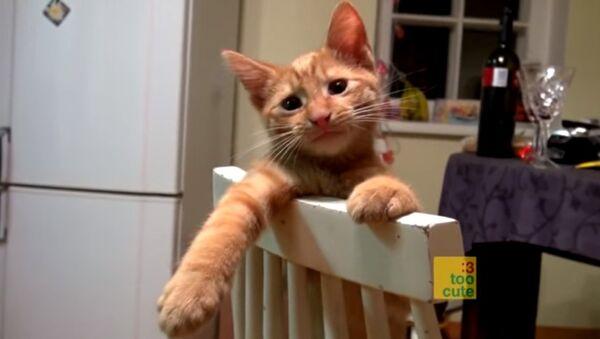 Коты в неловких положениях