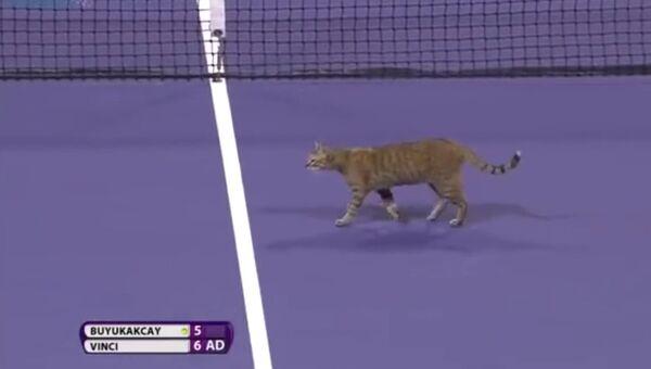 Кот едва не сорвал теннисный матч