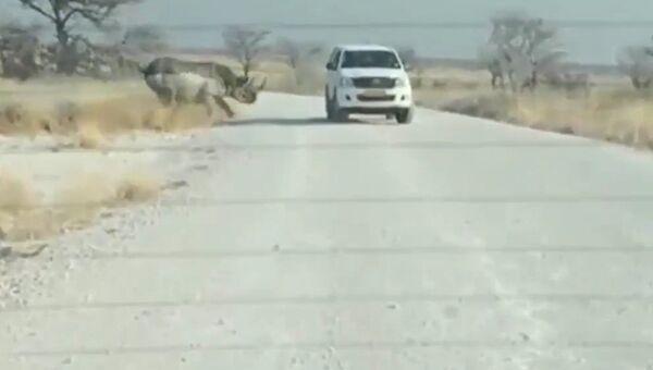 Носорог протаранил джип с туристами