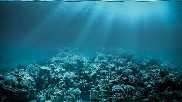 Океанское дно. Архивное фото