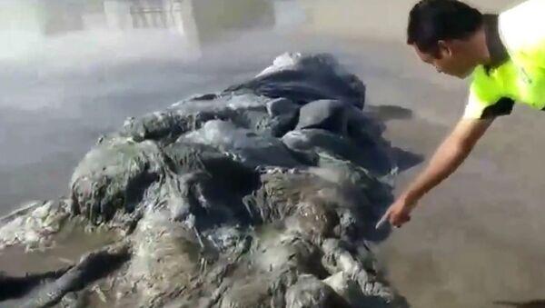 На берег Мексики вынесло морского монстра