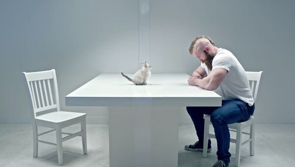 Гляделки с котиком