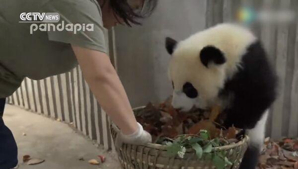 Панда, прочь из моей корзины