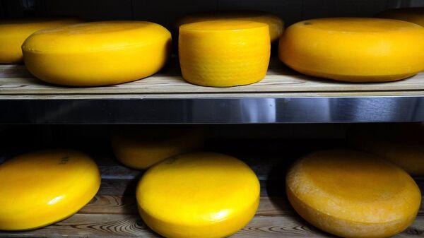 Производство сыра Камамбер в Краснодарском крае