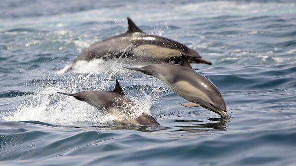 Дельфины в Тихом океане недалеко от Лонг-Бич, Калифорния