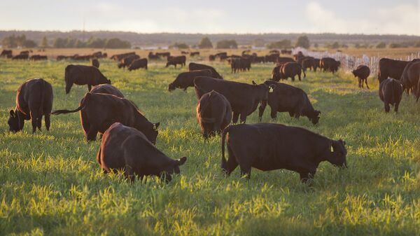 Животные на ферме компании Мираторг