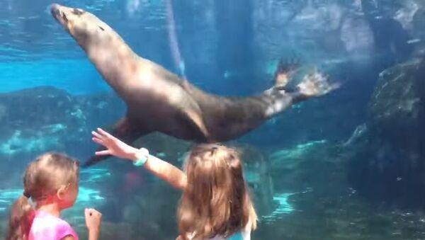 Повелительница морских львов