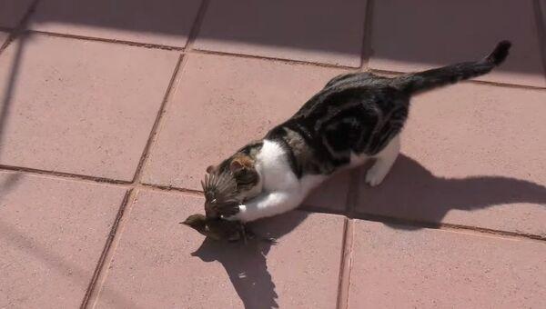 Кот играет с птичкой