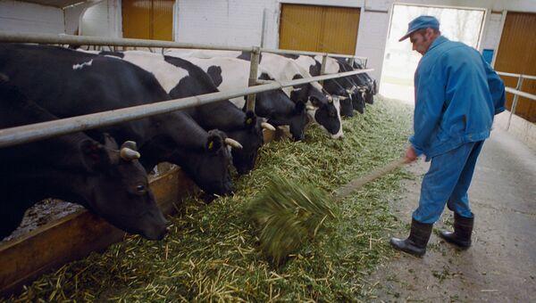 Комплекс по производству молока. Архивное фото