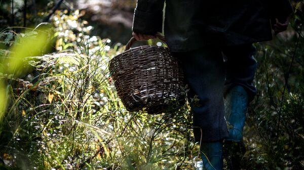 Жительница Новгородской области собирает грибы в лесу