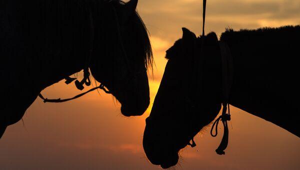 Лошади на полях Монголии