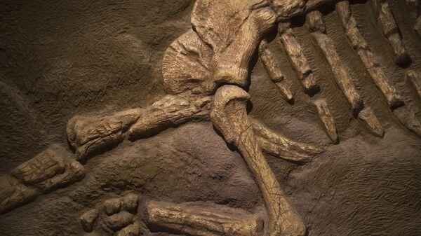 Окаменелые кости динозавра
