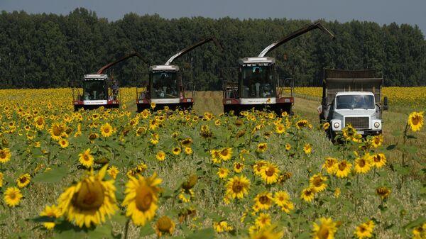 Уборка урожая зерновых культур фермерами. Архивное фото