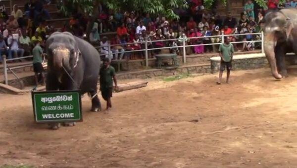 Слоновья грация