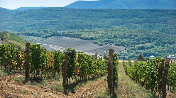 Винодельческое хозяйство UPPA Winery в Крыму. Архивное фото