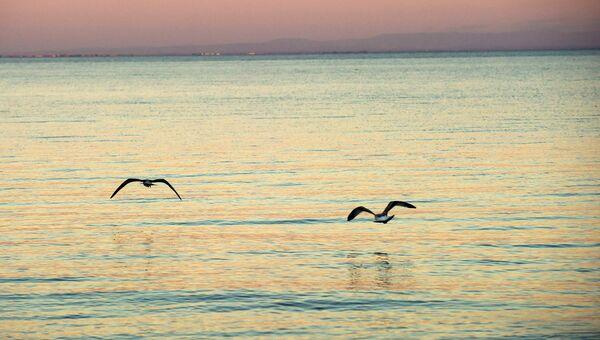 Чайки на Черном море. Архивное фото